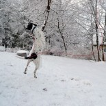 Mexican Jumping Snow Goose