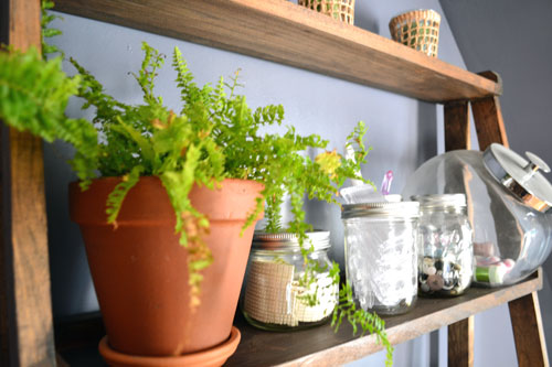 Potted Ferns On The Shelf