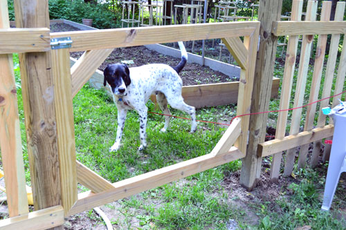 Fence Gate Frame Attached
